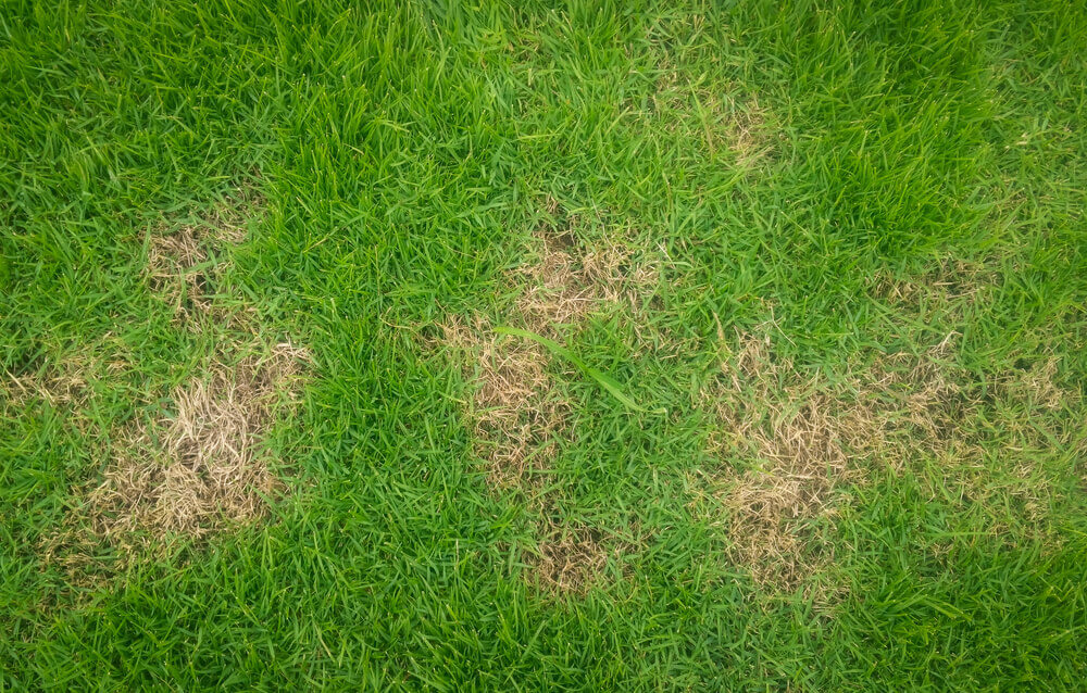 Patch-a-Spotty-Lawn